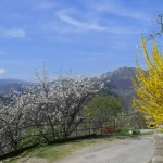 Champeaux-au printemps
